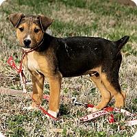 Adopt A Pet :: Max - Windham, NH