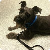 Adopt A Pet :: Pistachio-NEWS! - Laurel, MD