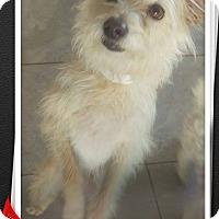 Adopt A Pet :: Heidi - Apache Junction, AZ