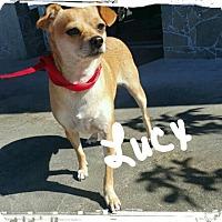 Adopt A Pet :: Lucy lou - Palm Bay, FL