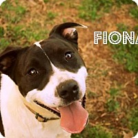 Adopt A Pet :: Fiona - Mocksville, NC