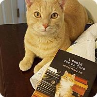 Adopt A Pet :: Scotch - Knoxville, TN