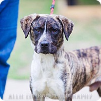 Adopt A Pet :: Lenny - Southern Pines, NC