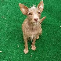 Adopt A Pet :: Truffles - San Antonio, TX
