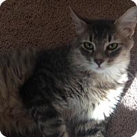 Adopt A Pet :: Bailey - Monroe, GA