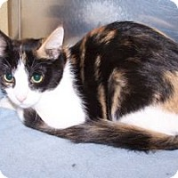 Adopt A Pet :: K-Kolb3-Lollypop - Colorado Springs, CO