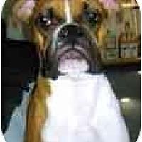 Adopt A Pet :: Kenny - Albany, GA