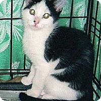 Adopt A Pet :: Paco - Chesapeake, VA