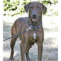 Adopt A Pet :: Charlotte - courtesy post - Scottsdale, AZ