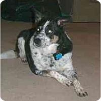 Adopt A Pet :: Cricket - Phoenix, AZ