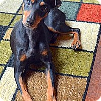 Adopt A Pet :: Trooper - Nashville, TN