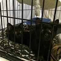 Adopt A Pet :: Maxi - Byron Center, MI