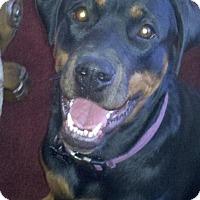 Adopt A Pet :: Lia - Gilbert, AZ