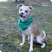 Adopt A Pet :: Budderkup - Mocksville, NC