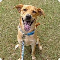 Adopt A Pet :: Carl - Helena, AL