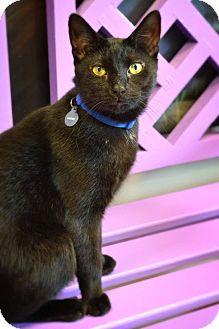 Domestic Shorthair Cat for adoption in Byron Center, Michigan - Gordy