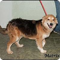 Adopt A Pet :: Matrix - Ada, OK
