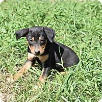 Adopt A Pet :: Alexi - Groton, MA
