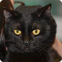 Adopt A Pet :: Oscar - Ottumwa, IA
