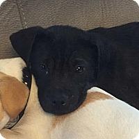 Adopt A Pet :: Rudy - Jacksonville, FL
