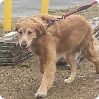 Adopt A Pet :: Patrick 754 - Naples, FL