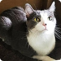 Adopt A Pet :: Sir Kitty - West Des Moines, IA