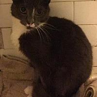 Adopt A Pet :: Gracelynn - New York, NY