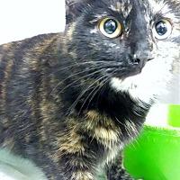 Adopt A Pet :: Rainbow Brite - Chelsea - Kalamazoo, MI