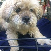 Adopt A Pet :: Marsha-BLIND - Oak Ridge, NJ