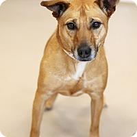 Adopt A Pet :: Lyla *Petsmart GB* - Appleton, WI