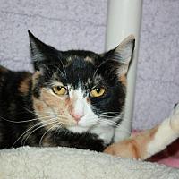 Adopt A Pet :: Sherrie (Manhattan) - New York, NY