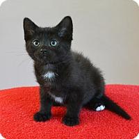Adopt A Pet :: Alanna - Springfield, IL