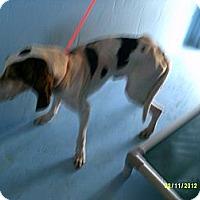 Adopt A Pet :: Blaine - Dundas, VA