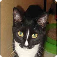 Adopt A Pet :: Oreo - Jenkintown, PA