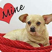 Adopt A Pet :: Pee Wee - Cheyenne, WY