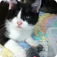 Adopt A Pet :: Johnnie - Riverside, RI