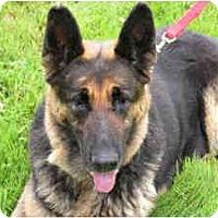 Adopt A Pet :: Jade - Rigaud, QC