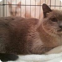 Adopt A Pet :: Cleopatra - Colorado Springs, CO