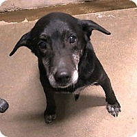 Adopt A Pet :: Daryll - Geneseo, IL