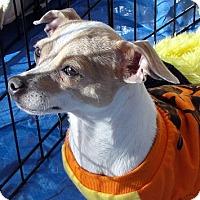 Adopt A Pet :: Renee - Tumwater, WA