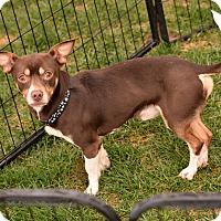 Adopt A Pet :: Vinnie - Meridian, ID