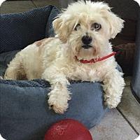 Adopt A Pet :: Emily - El Segundo, CA