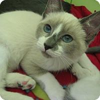 Adopt A Pet :: TRIXIE - Brea, CA