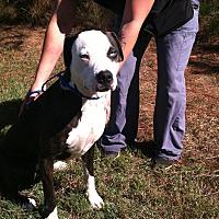 Adopt A Pet :: Dizzy - Seneca, SC