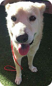 Labrador Retriever Mix Dog for adoption in Beachwood, Ohio - Charley