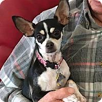 Adopt A Pet :: Ruby - Dallas, TX