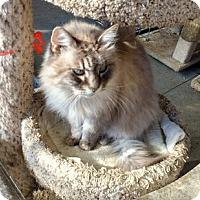 Adopt A Pet :: Princess - El Dorado Hills, CA