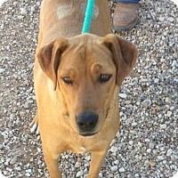 Adopt A Pet :: Laney - Post, TX