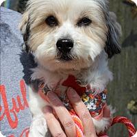 Adopt A Pet :: Cherry Darling - Three Legs - Los Angeles, CA
