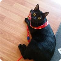 Adopt A Pet :: Zippo - Houston, TX